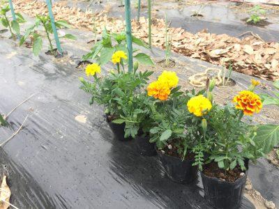 companion-plants
